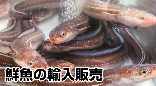 鮮魚の輸入販売